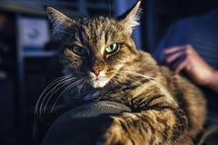 Minou aux yeux verts Photo libre de droits