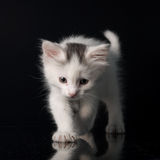 Minou blanc Image stock