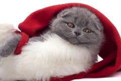 Minou de pli d'écossais de Noël Images libres de droits