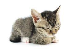 Minou de sommeil Images stock