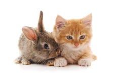 Minou et lapin rouges image stock