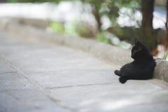 Minou noir Photo stock