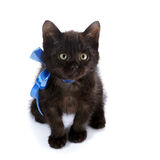 Minou noir avec un arc bleu Photo stock