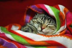 Minou somnolent Photographie stock libre de droits