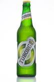 MINSK, BELARUS-AUGUST 23, 2016. Tuborg glass bottle beer on green background. Royalty Free Stock Photos