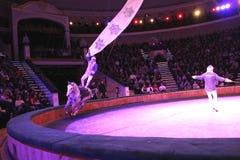 Minsk, Belarus, Belorussian State circus, 2012 Royalty Free Stock Photos