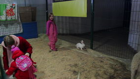 Minsk, Belarus, February 7, 2016, farm exhibition. Сhildren communicate with sheep and rabbits stock video footage
