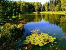 Minsk botanisk trädgård Arkivfoto