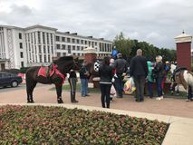 MINSK, MINSK, BIELORUSSIA, IL 3 LUGLIO 2017; Festa della città, festa dell'indipendenza Cavalli da equitazione e cavallini vicino Fotografia Stock