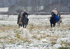 Re-enactment of the traditional hunting with russian wolfhounds. Minsk region, Belarus - November 5: Historical reconstruction of the traditional hunting with Royalty Free Stock Images