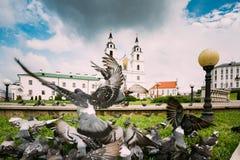 Minsk, Wit-Rusland Duivenduiven die dichtbij Kathedraal van Heilige Spir vliegen stock afbeeldingen