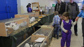 Minsk, Wit-Rusland, 7 Februari, 2016, landbouwbedrijftentoonstelling stock video