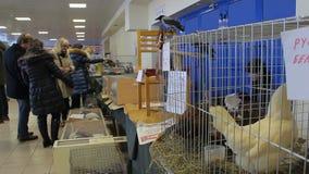 Minsk, Wit-Rusland, 7 Februari, 2016, landbouwbedrijftentoonstelling stock footage