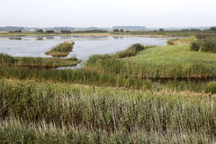 Free Minsmere RSPB Reserve, Royalty Free Stock Photography - 36653807