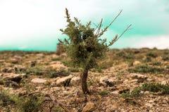 Minsta ökennatur för träd Arkivfoto
