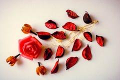 Minsta begrepp som göras av rosa kronblad och rosebud på vit bakgrund royaltyfri bild