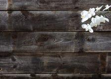 Minsta lägenhet som är lekmanna- av äkta wood bakgrund med vita orkidér Arkivbild
