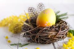 Minsta påsksammansättning Gult dekorativt fegt ägg i de redemimosablommorna och fjädrarna arkivbilder