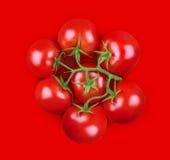 Minsta sammansättning av tomater på röd bakgrund Royaltyfri Foto