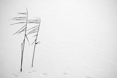 minsta vinter Arkivbild