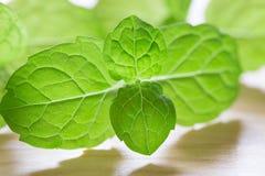 Mint листья Стоковые Изображения RF