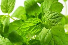 Mint листья Стоковое Фото
