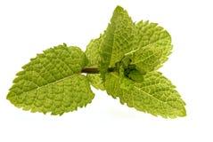 Mint листья Стоковое Изображение RF