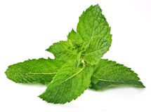 Mint Royalty Free Stock Images
