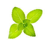 Mint Stock Photography