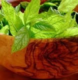 Mint. Wooden bowl with fresh mint leaves in it stock photography