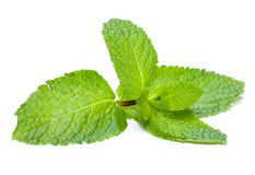 Mint. Fresh Mint isolated on white royalty free stock image