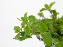 Mint. A bunch of mint on a white background Stock Photography