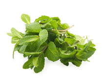 Mint. Green mint on white background Stock Photography
