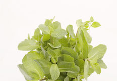 Mint. A bunch of mint on a white background Royalty Free Stock Photography