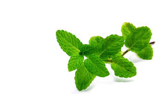 Free Mint Royalty Free Stock Images - 14067449