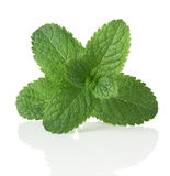 Mint. Green mint. Isolated over white Royalty Free Stock Photography