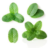 Mint. Collection of fresh mint leaves. Isolated over white Royalty Free Stock Photos