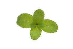 Mint Royalty Free Stock Photos