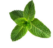 Mint. Stock Images