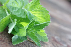 Mint. Fresh spearmint. Mentha piperita, Mentha arvensis, Melissa officinalis Stock Photos