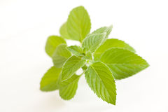 Mint. Leaves isolated on white Stock Image