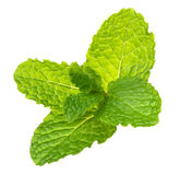 Mint. Fresh mint on white background Royalty Free Stock Photography