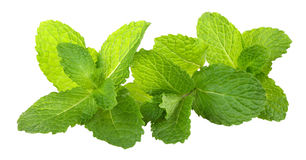 Mint. Fresh mint on white background stock photos
