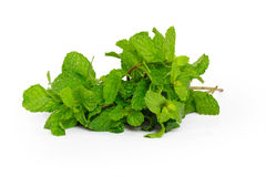 Mint. On a white background stock photos