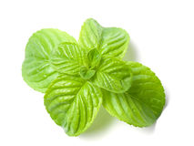 Mint. Closeup of Mint leaves on a white background stock photography