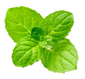 Mint. Leaf isolated on white royalty free stock photos
