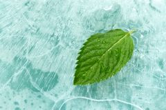 Mint. Leaf on ice surface royalty free stock images