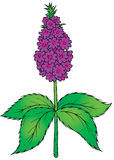 Mint. Isolated clip-art / children's book illustration for your design vector illustration