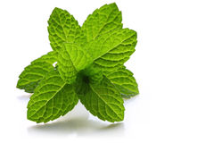 Mint Royalty Free Stock Image