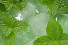Mint. Cocktail from mint and ice royalty free stock photography